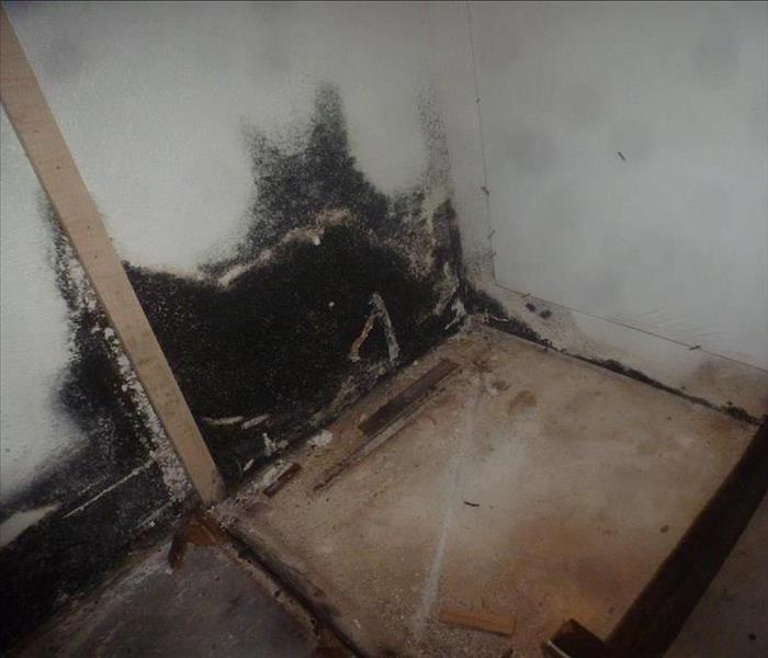 Mold remediation in Rancho Cucamonga, CA Before