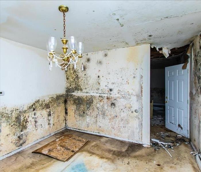 Mold Remediation Mold spreads fast