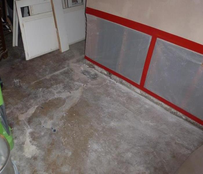 Mold Remediation Fungi and Mold